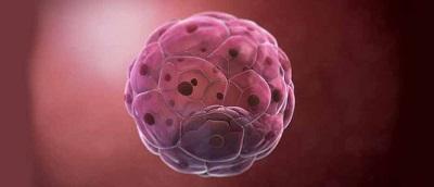 blastocyst treatment